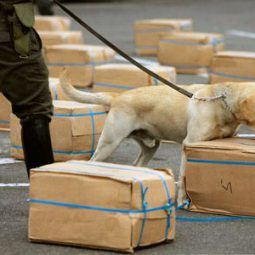 Image for Are Drug Dogs Used in Searches Reliable? A Miami Criminal Lawyer Explains post