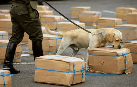 Are Drug Dogs Used in Searches Reliable A Miami Criminal Lawyer Explains